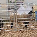 Väravaga kogumisaed-lamba3